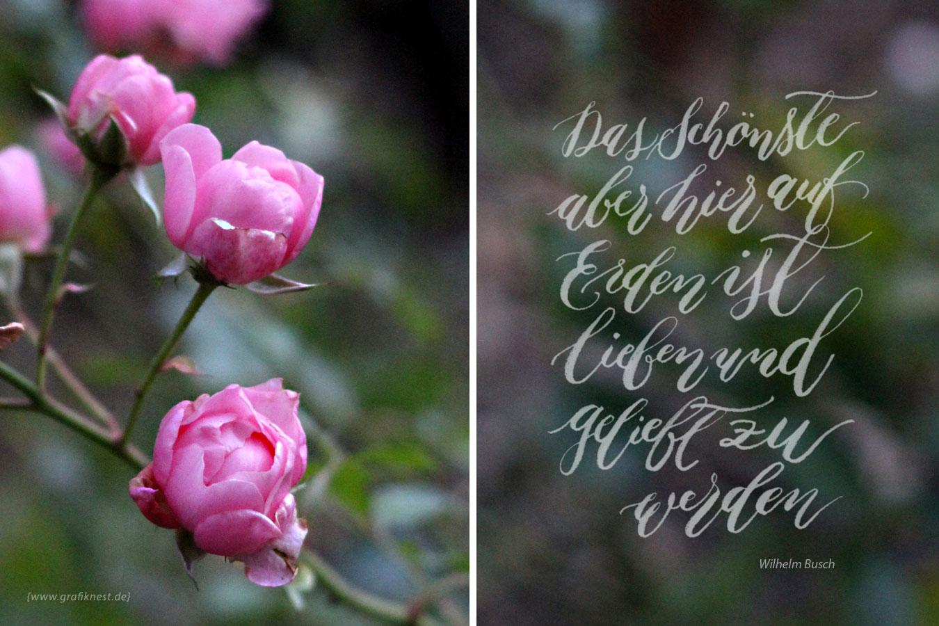 Brushlettering zitat zur hochzeit auf rosen - Blumen zitate ...