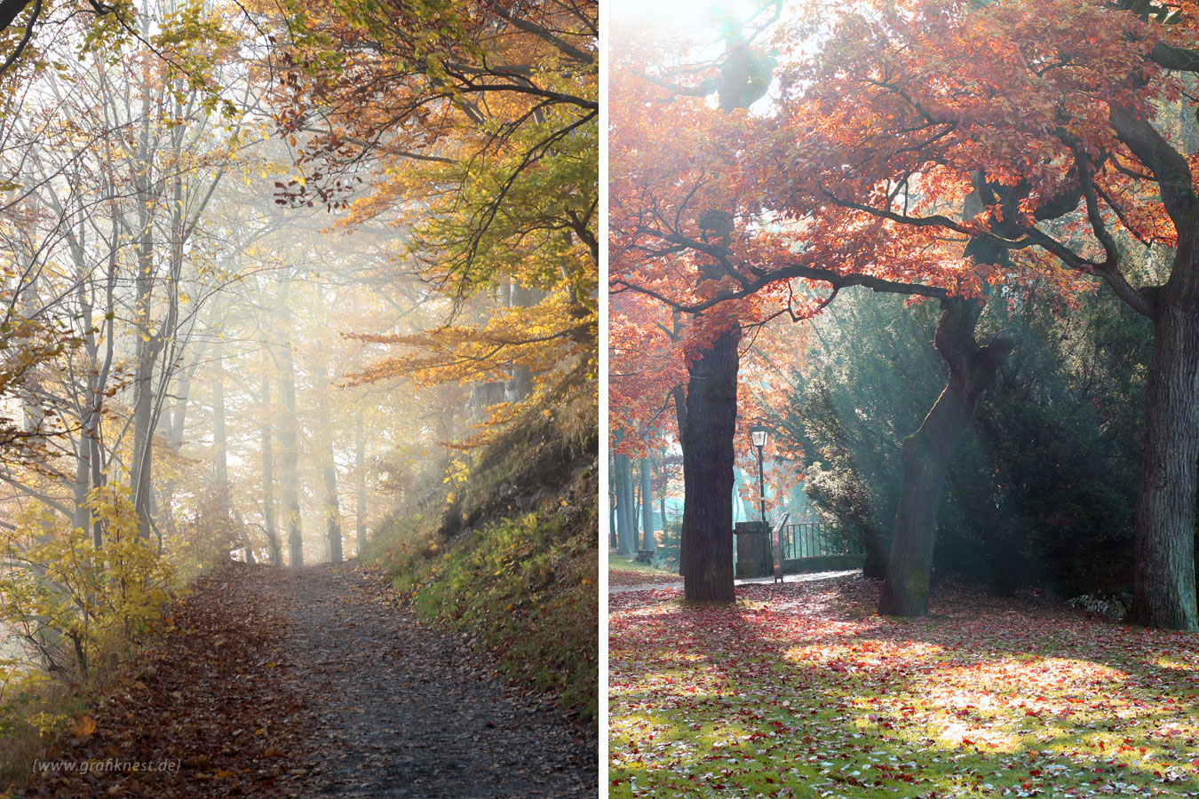Fotografie Herbst Wald Impression