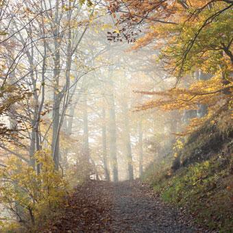 { Hand-Lettering: Namen in weiß auf Herbst-Laub }